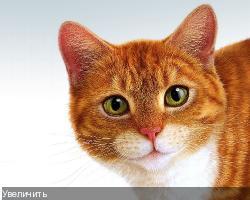 http://i31.fastpic.ru/thumb/2011/0926/9f/fe1f695b275f50374dfcfa3cc10c3c9f.jpeg