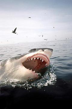 Акулы-людоеды / Rogue Sharks (2011) HDTV 1080i