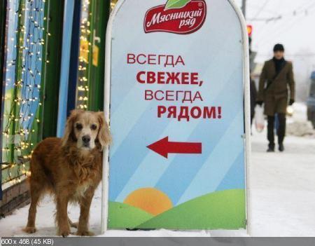 Смешные вывески, реклама, объявления (Декабрь 2011)