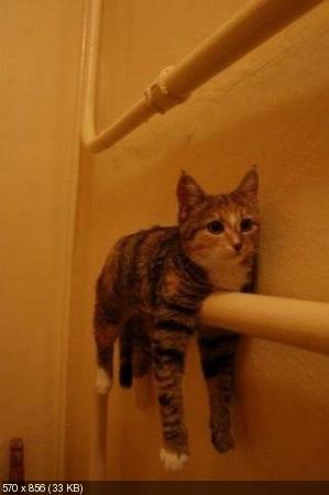 Пришла суббота-коты отдыхают (44 кото-фотки)