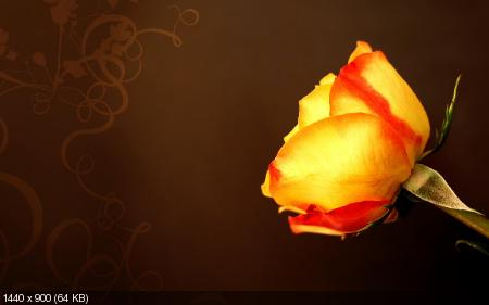 Красивые цветы - Обои на рабочий стол (2011) JPG