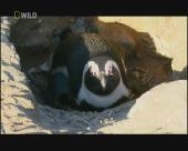 ����������� ���� ��� ��������� / Penguin Death Zone (2004) SATRip