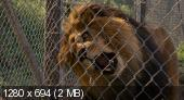 Kupili¶my Zoo / We Bought a Zoo (2011) BluRay.720p.DTS.x264-CHD