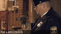 Секретная операция в Филадельфии: Собачьи бои / Dog fightin (2012) SATRip